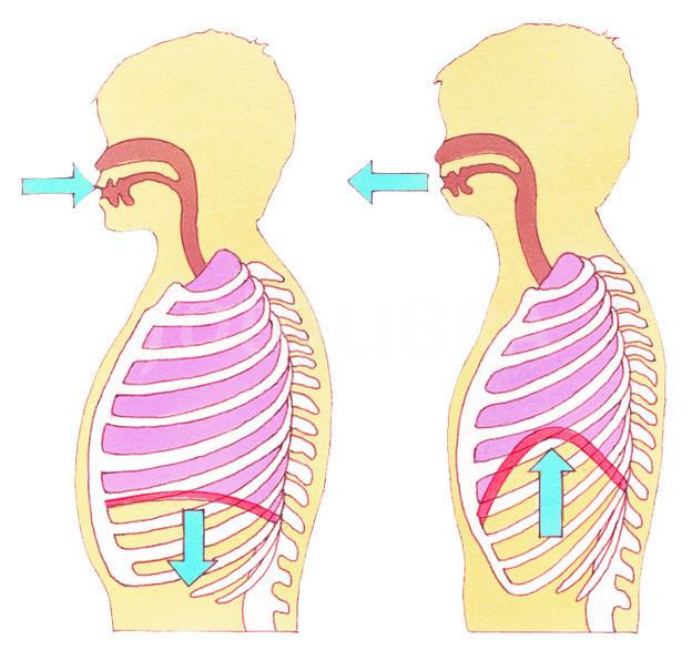 Image Gallery inhale diagram