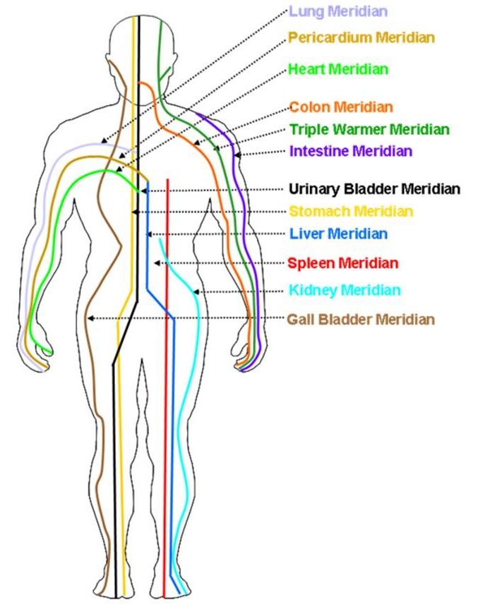 12 Organ Meridians